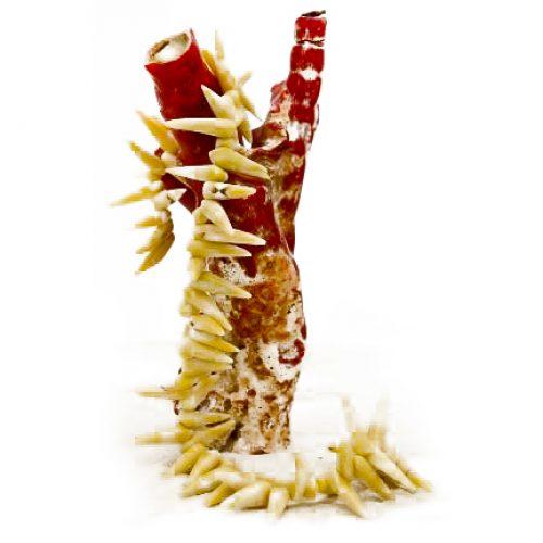 Bambuskorallen Strang beige-weiß-0
